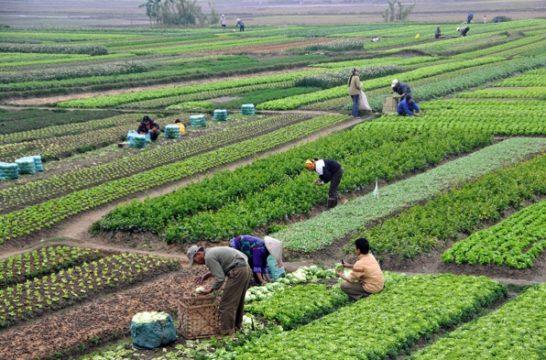 agriculturestocks.jpg