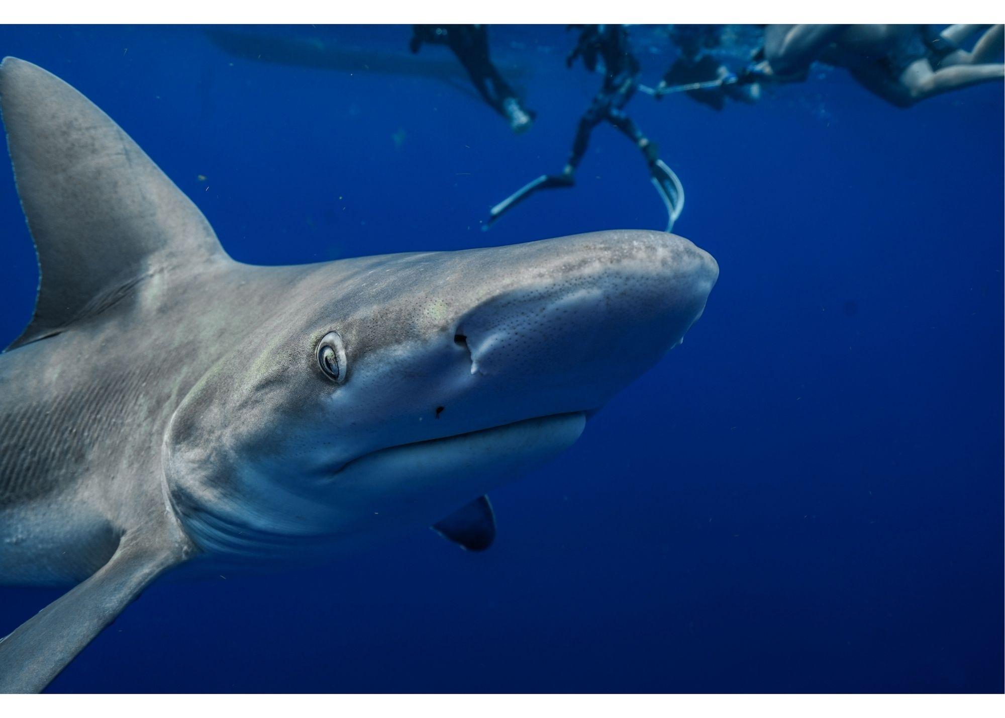richest shark on shark tank